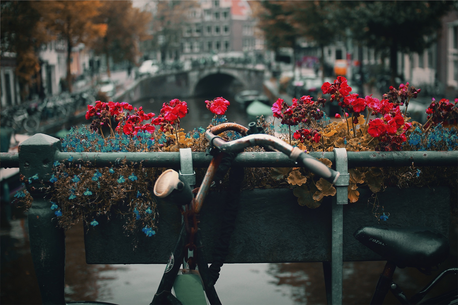 Amsterdam – The Almost Local Guide